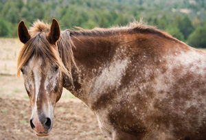 Learn all about horses breeds